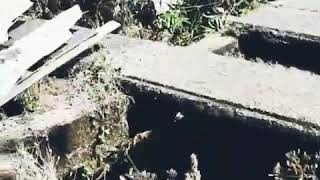 Rescuing a Dog From the Bottom of a Water Tank in Lonavala!