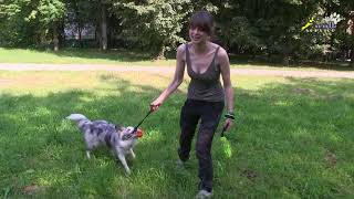 Как преждевременные выводы о поведении собаки мешают её дрессировке