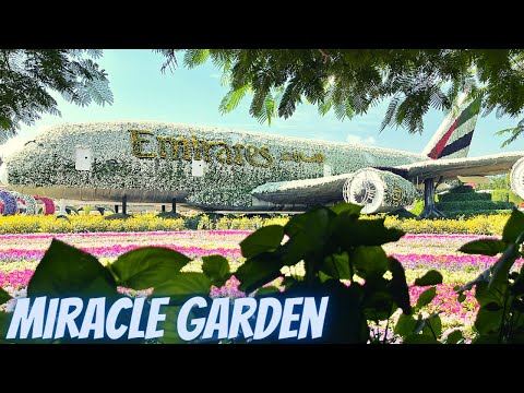 Miracle Happens in Miracle Garden | Largest Flower Garden in the world | Dubai 2020