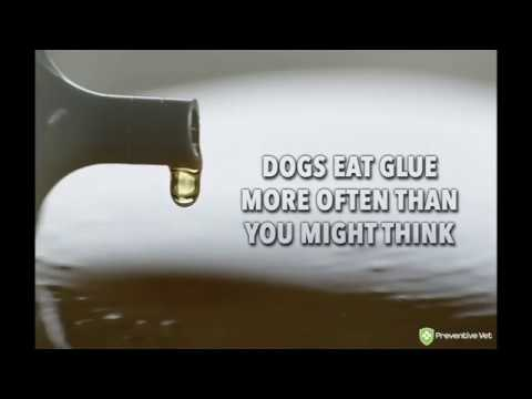 Dogs & Gorilla Glue® – More than just a sticky situation