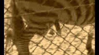 Fakty z życia wzięte #3 Sekret zebry