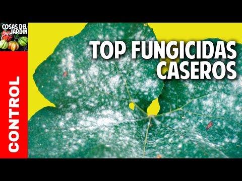 Usos de la Canela en las Plantas - Fungicida, Enraizante y Repelente de Hormigas - 1