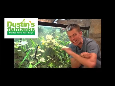 dustin 39 s fish tanks youtube channel intro welcome to