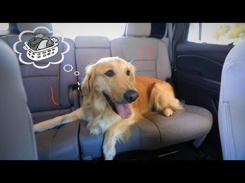 designed-for-dogs:-honda-suvs,-minivan-and-trucks