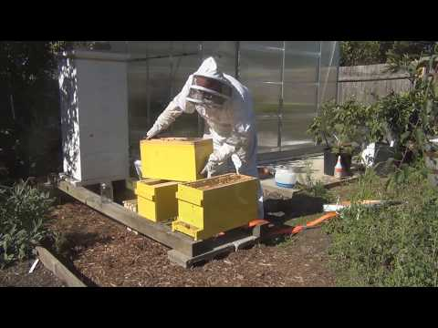 Adding another Brood box to the Hive