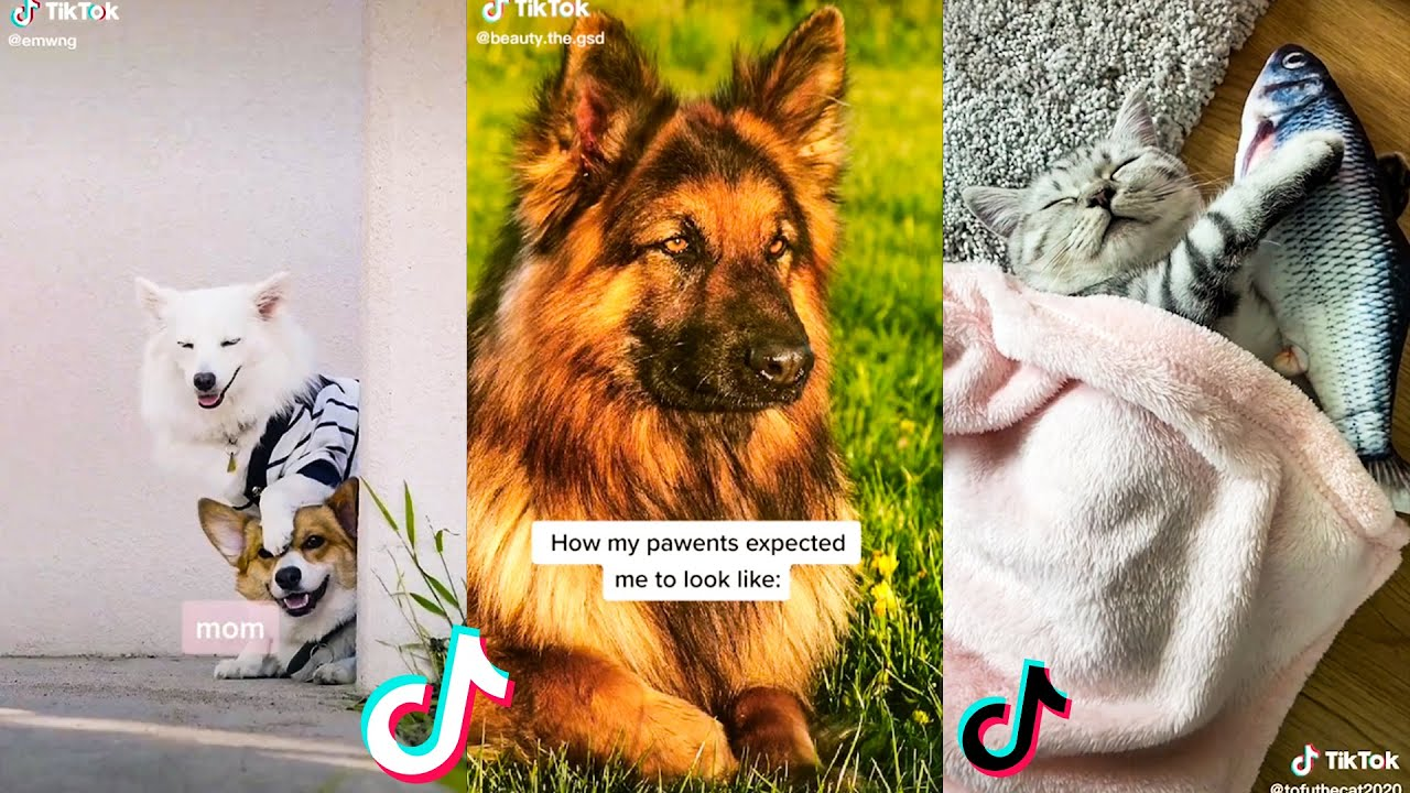 These Might Be The Cutest Pets On Tik Tok Compilation 🤔😻 #2