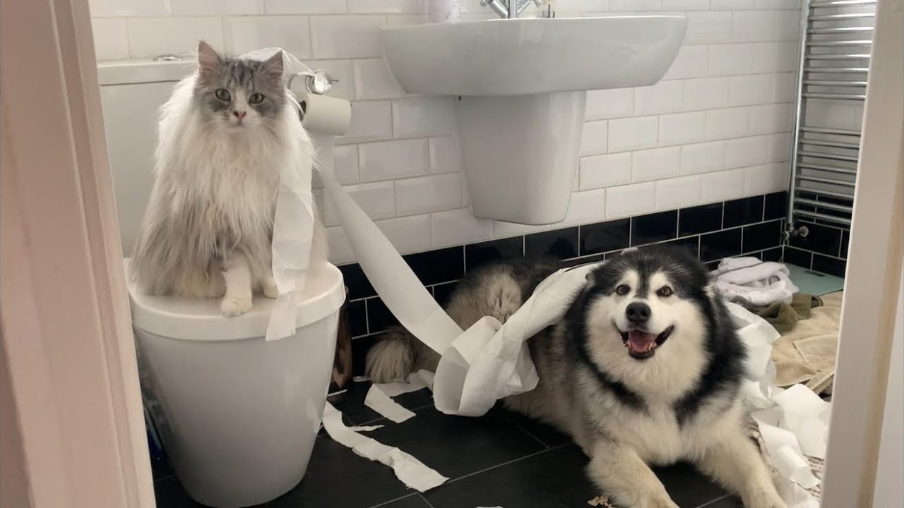 Naughty Niko Teepeed Our House Again Cheeky Malamute Youtube She is busy bringing up her little brother, marc, and has an intense relationship with her father, christian. naughty niko teepeed our house again cheeky malamute