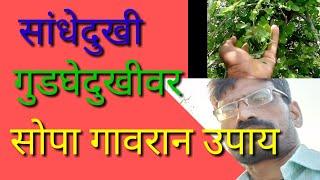 सांधेदुखी वर गुडघे दुखीवर आयुर्वेदिक गावरान उपाय मेडसिंग औषध | sandhe dukhivar gudghedukhivar upay