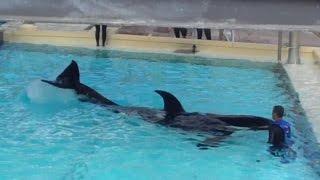 Shouka Med Pool Waterworks 10-17-14
