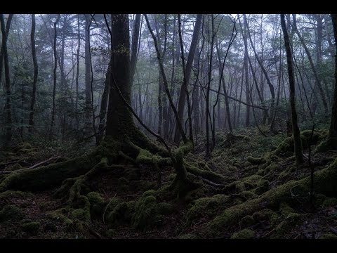 EXPLORING Suicide Forest Aokigahara, Japan ( 青木ヶ原 )