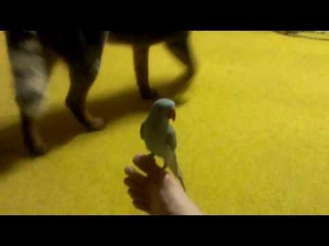 Cheeky Bird Flirting With Toes