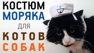 Одежда для кошек и собак Моряк с AliExpress Обзор Цена Купить