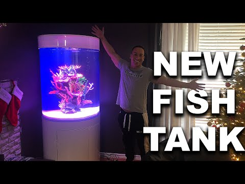 MY NEW SALTWATER AQUARIUM! The King Of DIY