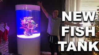 my-new-saltwater-aquarium-the-king-of-diy