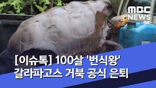 [이슈톡] 100살 '번식왕' 갈라파고스 거북 공식 은…