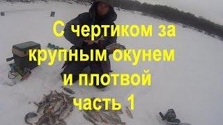 Зимняя рыбалка.Ловля на безмотылки.Ловля крупной рыбы на чертик.Часть 1-я(в данном видео хочу поделиться основными моментами при ловле рыбы на безмотыльного чертика.Наконец-то..., 2016-12-06T05:23:40.000Z)