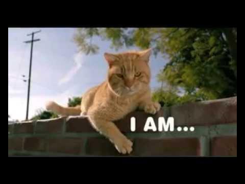 Iams Cat Food Advert
