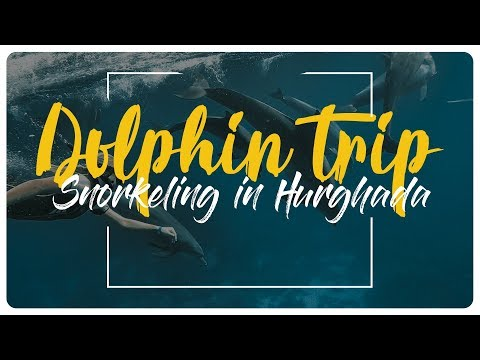 Dolphin Trip in Egypt - Hurghada Red Sea