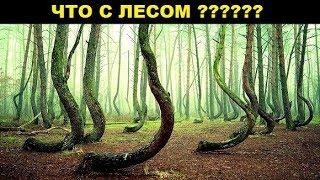 10 Самых Необычных Лесов в Мире
