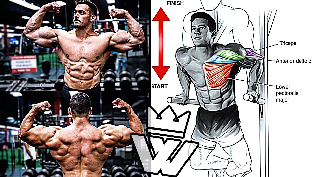 BEST Full Body WORKOUT | How to Get Massive Muscle Gains