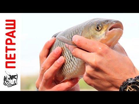 Рыбалка в Киевской области