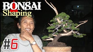 Bonsai Tree Shaping / Makeover #6 by Tedy Boy Indonesia