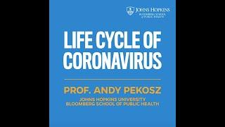 Life Cycle of the Coronavirus