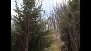 Tree Planting Tips - Maple Grove Arbor Committee