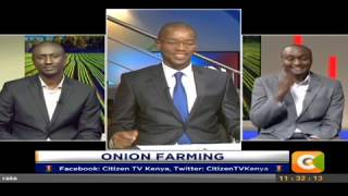 Citizen Extra:How can Onion farming be done better?