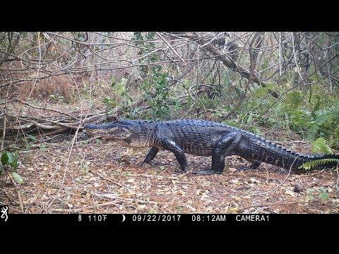 Swamp Trail Camera Pickup