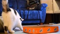 Kissalle laatikkotemppun opetusta