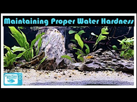 Fish Tank Water Hardness Fully Explained: Don't Kill Your Fish!