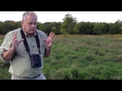Bobolink and Eastern Meadowlark in Ontario - Population and Habitat Evolution