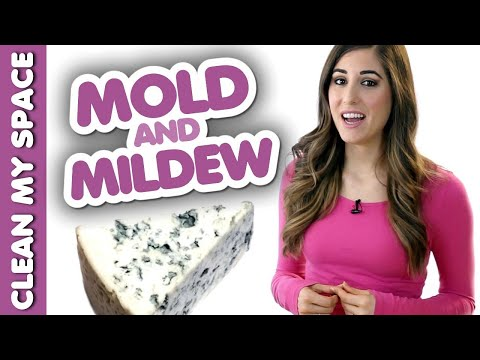 4 Things You Should Know about Mold & Mildew! (Clean My Space)