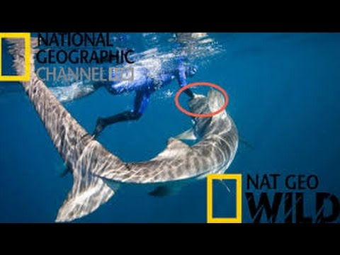National Geographic Documentary 2016 HD 1080p - Australia's Deadliest Shark Coast Killer Sharks
