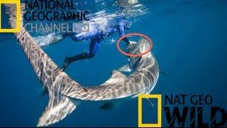 National Geographic Documentary 2016 HD 1080p - Australia's Deadliest Shark Coast Killer Sharks
