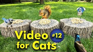 TV for Cats   Backyard Bird and Squirrel Watching   Video 12