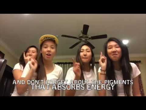Photosynthesis/ Cellular Respiration Song