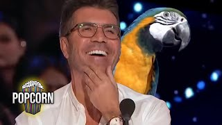 TALENTED ANIMAL AUDITIONS! NonStop Got Talent Dogs Parrots and MORE!