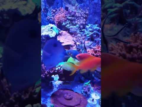 radion pro g4 ,mix reef, salt water, reef tank ,aquarium ,Sps,