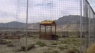 2014 sep 13 Safe Haven Wildlife Unionville, Nevada