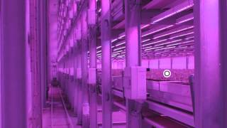Philips City Farming