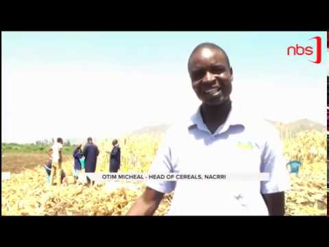 Harvest Rain Water- Expert Advises Farmers