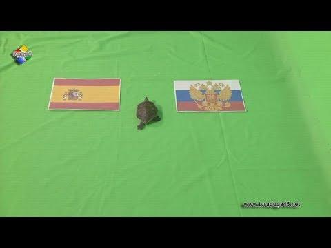 ИСПАНИЯ - РОССИЯ | ПРОГНОЗ НА ЧЕМПИОНАТ МИРА ПО ФУТБОЛУ | прогнозы на спорт на сегодня | прогнозиз YouTube · Длительность: 42 с