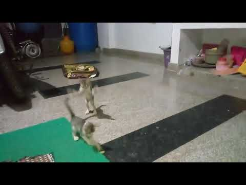 Baby cat playing with grapes
