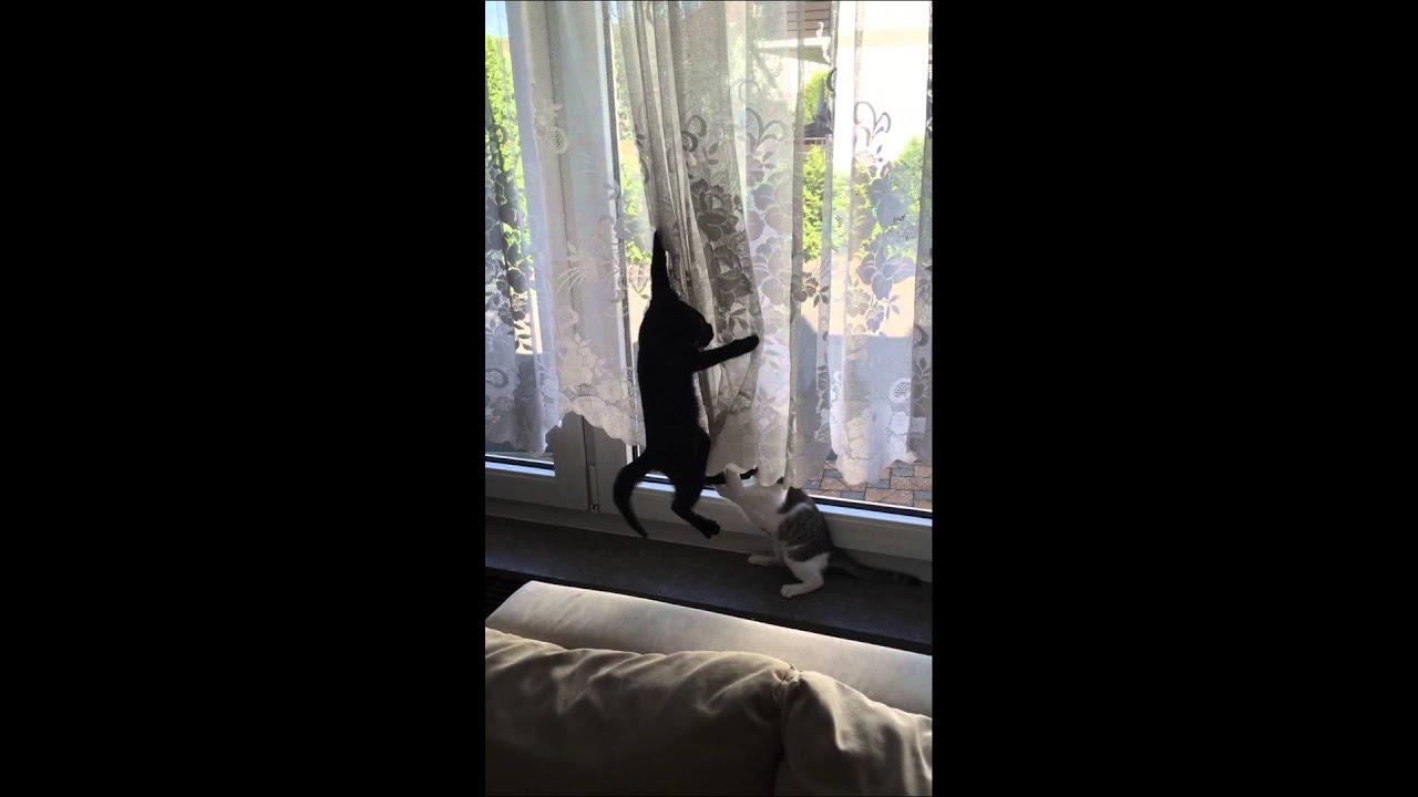 Welche Vorhänge Bei Katzen – Zuhause Image Idee