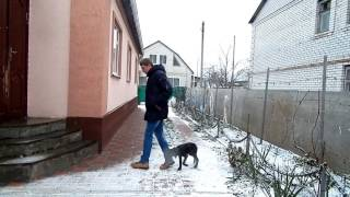 Дрессировка щенка - Рядом (День 1. Первые шаги и базовые правила) - Дрессировка дратхаара