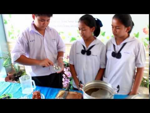 โครงงานคอมพิวเตอร์-การทำน้ำยาล้างจานเอนกประสงค์