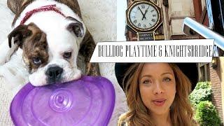 Bulldog Playtime & Knightsbridge | Vlune #3