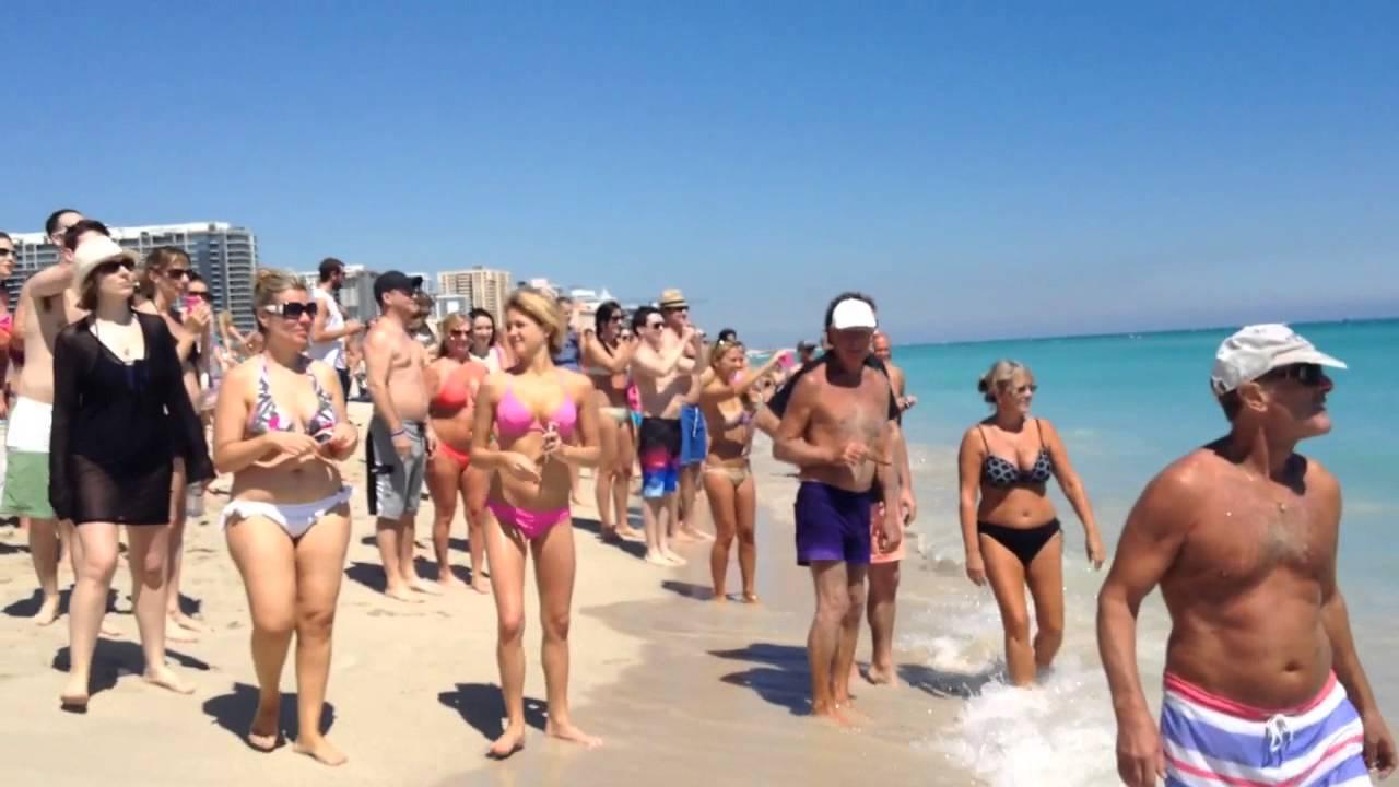 Manatee In Miami Beach